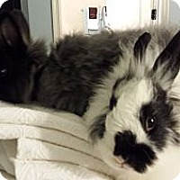 Adopt A Pet :: Dolly and Abigail - Conshohocken, PA