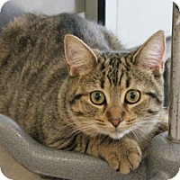 Adopt A Pet :: Chance - Verdun, QC