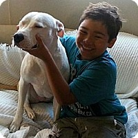 Adopt A Pet :: Valentine URGENT - San Diego, CA