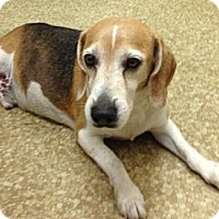Adopt A Pet :: Bandit - Davie, FL