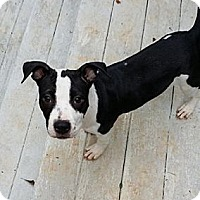 Adopt A Pet :: Yahoo - Marietta, GA
