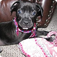 Adopt A Pet :: Olive - Rochester, NY