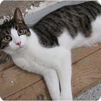 Adopt A Pet :: Piggly Wiggly - Warminster, PA