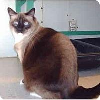 Adopt A Pet :: Sammy - El Cajon, CA