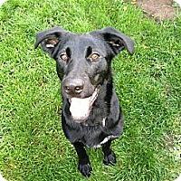 Adopt A Pet :: Koda - Wasilla, AK