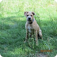 Adopt A Pet :: Rosco Wilder - Southampton, PA