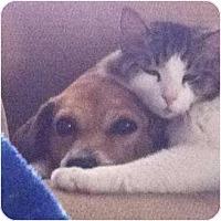 Adopt A Pet :: Bingo - Only $35 adoption fee! - Litchfield Park, AZ