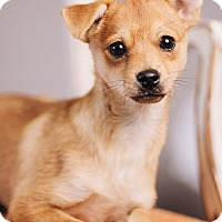 Adopt A Pet :: Arlo - Portland, OR