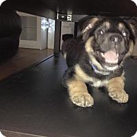 Adopt A Pet :: TUNDRA - Winnipeg, MB
