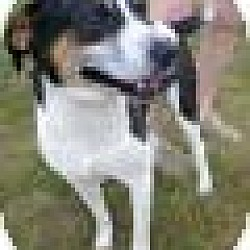 Photo 2 - Hound (Unknown Type) Mix Dog for adoption in Metamora, Indiana - Bailey