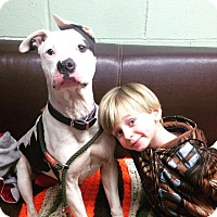 Adopt A Pet :: Sam - Long Beach, NY