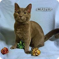 Adopt A Pet :: Casper - Bentonville, AR
