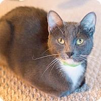 Adopt A Pet :: Britton - Chicago, IL