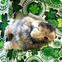 Adopt A Pet :: Astrid - Paramount, CA
