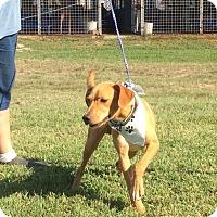 Adopt A Pet :: Jax - Albany, NY