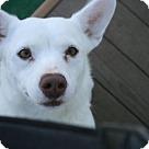 Adopt A Pet :: Baskin