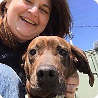 Adopt A Pet :: Kisses - Lewisburg, TN