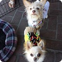 Adopt A Pet :: Cupcake & Jackie Chan - Encino, CA