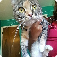 Adopt A Pet :: Casey - North Brunswick, NJ