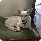 Adopt A Pet :: Berkeley 4126