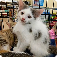 Adopt A Pet :: Spring - Maryville, TN