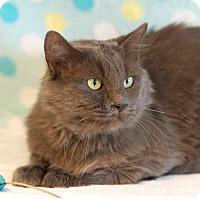 Adopt A Pet :: Greyson - Coronado, CA