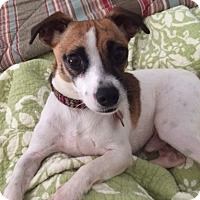 Adopt A Pet :: Jackie Boy - PENDING - Grafton, WI