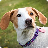 Adopt A Pet :: Dolly D3232 - Shakopee, MN