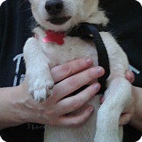 Adopt A Pet :: Chopper - Thousand Oaks, CA
