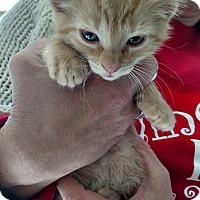 Adopt A Pet :: Rusty - Divide, CO