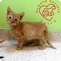 Adopt A Pet :: Charlie - Janesville, WI