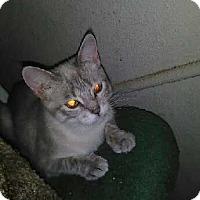 Adopt A Pet :: DELLA - Elk Grove, CA