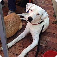 Adopt A Pet :: Dinah - E. Greenwhich, RI