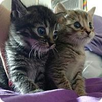 Adopt A Pet :: Zuko - Horsham, PA