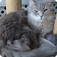 Domestic Longhair Cat for adoption in Michigan City, Indiana - Floofie