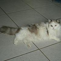 Adopt A Pet :: FL - Dottie (CP) - Tampa, FL
