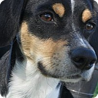 Adopt A Pet :: Bandit #5201 - Jerome, ID