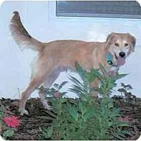 Adopt A Pet :: Eddie - Jacksonville, FL