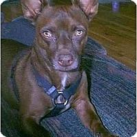 Adopt A Pet :: Chester - dewey, AZ