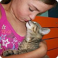 Adopt A Pet :: Tippy - Reston, VA