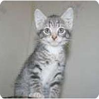 Adopt A Pet :: Jonah - Arlington, VA