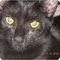 Adopt A Pet :: Panther - Riverside, RI