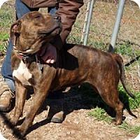 Adopt A Pet :: Maya - Athens, GA