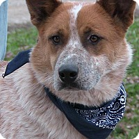 Adopt A Pet :: Ranger - Texico, IL