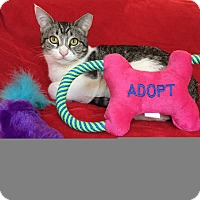 Adopt A Pet :: Smidge - Glendale, AZ