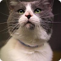 Adopt A Pet :: Bob - Parma, OH
