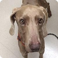 Adopt A Pet :: *Chantilly - Birmingham, AL