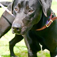 Adopt A Pet :: Lember - Choudrant, LA