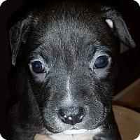 Adopt A Pet :: Sega - Cincinnati, OH