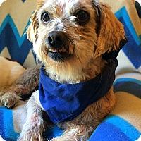 Adopt A Pet :: Ichigo - Clayton, CA